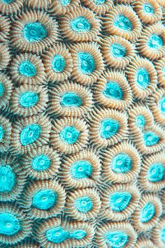 Natural Structures, Natural Forms, Patterns In Nature, Textures Patterns, Nature Pattern, Foto Macro, Hard Coral, Microscopic Photography, Beautiful Sea Creatures