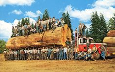 The men who built America, cut by cut, board by board.