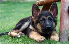 Need To Know Facts About Dog Training >>> Read more details by clicking on the image.