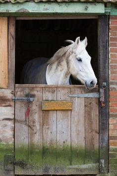 The physical plan of a properly designed horse barn will promote the health and safety of horses from foal to senior.