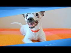 They Thought This 'Ugly' Dog Would Never Get Adopted, Until This Family Saw The Beauty Inside - YouTube