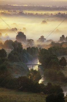 Misty Shimmering Forest