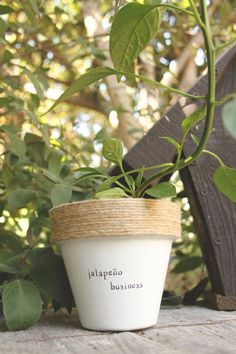 4 Jalapeno Business  Jalapeno Plant Indoor and Outdoor