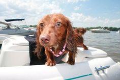 Puppy Boating #budgettravel #travel #puppy #cute #dog #italy www.budgettravel.com