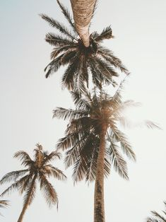 Ideas Coconut Tree Photography Sunsets For 2019 Iphone Background Wallpaper, Aesthetic Iphone Wallpaper, Aesthetic Wallpapers, Palm Tree Iphone Wallpaper, Beach Wallpaper, Retro Wallpaper, Photo Wall Collage, Picture Wall, Plage Art Mural