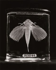 These striking images, photographed by Elaine Duigenan, are of specimens collected over 200 years ago and kept at the Royal College of Surgeons, in London.