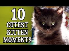Cole and Marmalade:  10 Cutest Kitten Moments