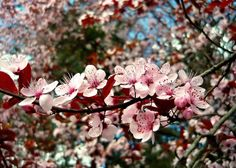 Beautiful Peach Blossom by teresa de pizzol on 500px