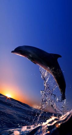 ☆ mammals : dolphin