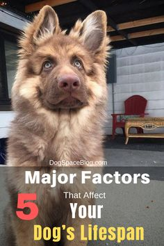 5 Major Factors That Affect Your Dog's Lifespan Dog Health Tips, Dog Health Care, Dog Commands Training, Dog Training Tips, Animal Nutrition, Pet Nutrition, Golden Retriever Training, Dog Presents, Medication For Dogs