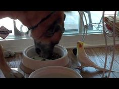 Look What I Caught My Bird Doing To My Dog! This Is So Adorable! | PetFlow Blog - The most interesting news for pet parents around the world.