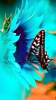 Mosaic Wings