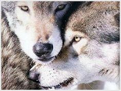 wolfs...