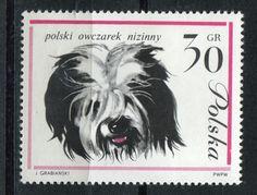 https://pl.wikipedia.org/wiki/Polski_owczarek_nizinny