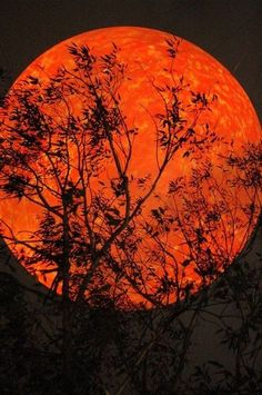 Night branches against an orange moon.
