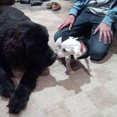 shrek le chien abandonne des marais 7   Shrek le chien abandonné des marais   Shrek sauvetage poil photo marais image fourrure chien adandon...