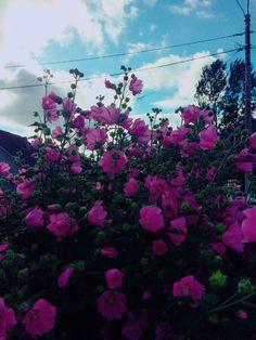 #pink #sky #pinkflowers #summer #summer2017