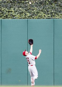 Shane Robinson makes a catch in center field against the Pittsburgh Pirates.  Cards lost 9-2.  7-29-13