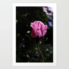 pink Art Print by ppatphoto - $14.56