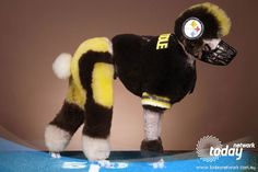 dogs costumes halloween football