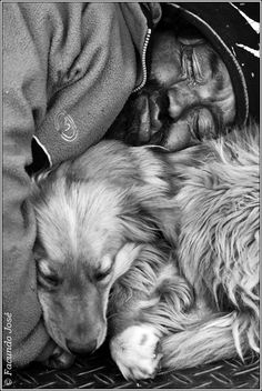 """Dogs are not our whole life, but they make our lives whole."" ~Roger Caras"