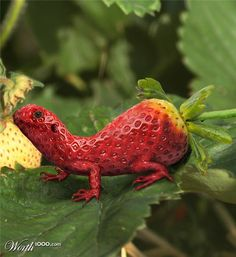 Lizard Berry by Keith Balanis (aka Pac0daTac0) made for Worth1000