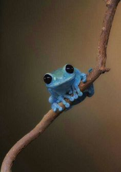 Little Blue Frog