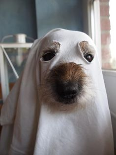 Ghost dog - Jersey's Halloween costume for next year! Funny Dogs, Funny Animals, Cute Animals, Beagle Funny, It's Funny, Hilarious, Diy Pour Chien, Into The Wild, Ghost Dog