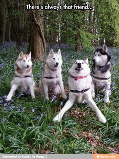 Come on guys!!! Lets GO!!! #rescuedog #dog #itsarescuedoglife