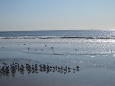 Look at all those little sand pipers!  Ocean City, New Jersey