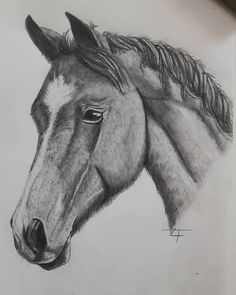 easy simple beginners drawing drawings pencil exercises sketches beginner draw sketch horse routines workout cool sketching basic horses persons inexperienced