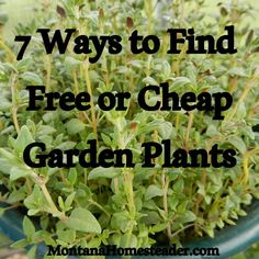 "7 Ways to Find Free or Cheap Garden Plants | Montana Homesteader: ""Do you want to expand your vegetable, herb or flower gardens but don't have a lot of cash to spend? Over the years I've figured out quite a few ways to add plants to my gardens and landscaping around the property for free or cheap."" 