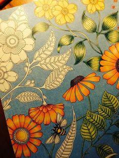 21 Best Johanna Basford Secret Garden Coloring Book Inspo Images