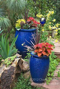 Some cobalt blue pots loaded with coleus, phormium and sweet potato vines make a colorful addition to Dan Johnson's Denver garden.