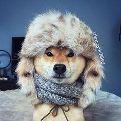 Baby, it's cold outside..❄❄⛄⛄  • Pinterest: @elimlops •