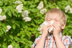 #Natural Remedies For Asthma, #asthma, #allergies