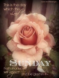 Have a blessed sunday Happy Day Quotes, Sunday Quotes, Daily Quotes, Good Sunday Morning, Good Morning Quotes, Have A Blessed Sunday, Happy Sunday, Sunday Greetings, Sunday Wishes