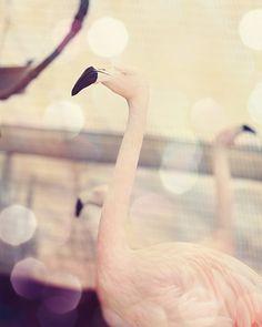 flamingo photograph pink nursery wall art by TheGinghamOwl on Etsy, $21.00