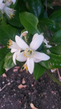 Flor de azar
