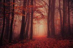 """Red forest framed photo print - wall art - autumn - fall - nature photography - misty - """"Secret Garden III."""" by Zsolt Zsigmond - SKU0128"""