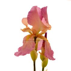 This flower is made out from clay FLEUR. Do you believe it? www.fleur-group.ru