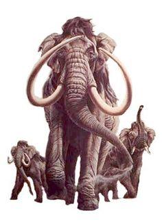 Mammoth -  Mark Marcuson