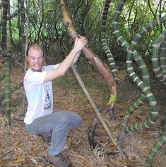 71 tecnica de curvar bambu Bamboo Art, Bamboo Crafts, Bamboo House Design, Bamboo Building, Cd Diy, Bamboo Construction, Bamboo Architecture, Bamboo Furniture, Wooden Boats