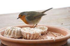 Pralinen für die Vögel Little People, Birds, Diy, Outdoor, Chocolate Candies, Outdoors, Bricolage, Short People, Bird