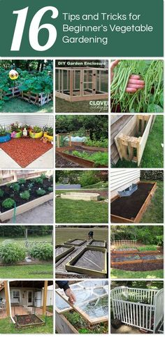 16 tips and tricks for beginner's vegetable gardening | Hometalk