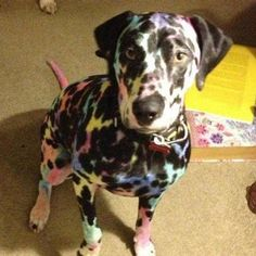 This Dalmatian who had a run-in with some kids and their markers. | 21 Funny Dog Pictures Guaranteed To Make You Smile