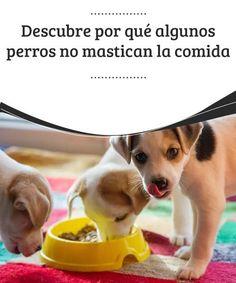 900 Ideas De Perruno En 2021 Perruno Perros Mascotas