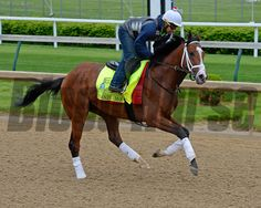Caption: Danzig Moon<br /> Horses on the track at Churchill Downs on Sun. April 26, 2015, in Louisville, Ky., in preparation for the Kentucky Derby and Kentucky Oaks.<br /> Works4_26_15 image258<br /> Photo by Anne M. Eberhardt