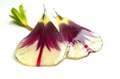 Resin dried tulip petal earrings. Resin jewelry. Real by byRima, €16.00