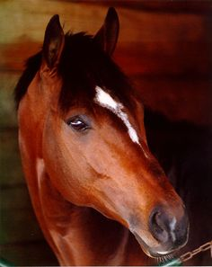Cigar 1995 and 1996 Horse of the Year-he's a favorite sweet boy of mine.  Visit him at the Kentucky Horse Park.